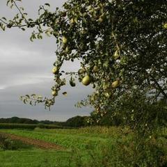 Wriemeling - Herent - Herfst 2014